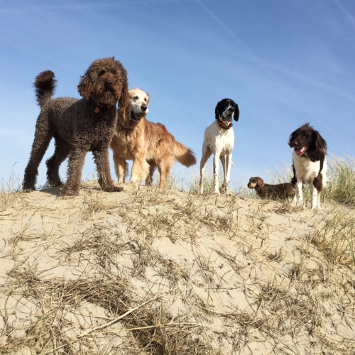 Hondenuitlaatservice op het strand
