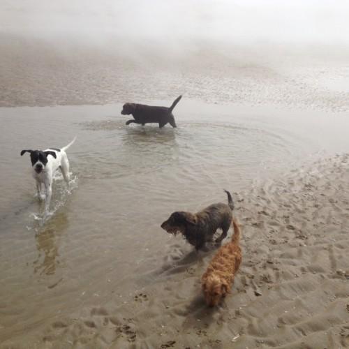 Hondenuitlaatservice in de mist op het strand