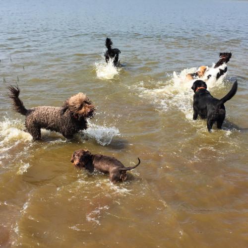 Hondenuitlaatservice bij het binnenmeer