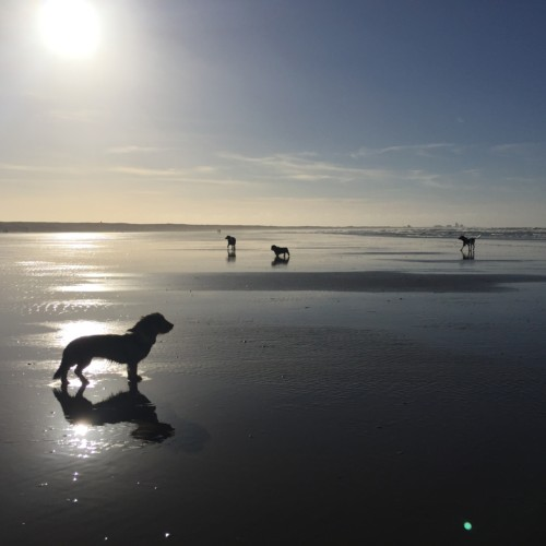 Strand bij Velsen