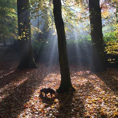 Teckel Pippe valt bijna niet op in het bos
